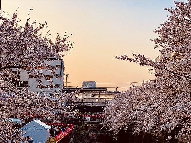 目黒川 桜 東急東横線 中目黒 レンタルスタジオ レンタルスペース 日比谷線 貸スタジオ